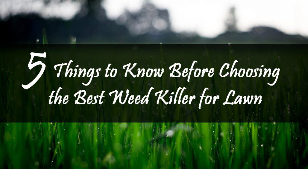The Best Weed Killer for Lawn