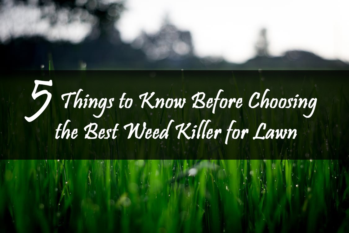 Best Weed Killer Spray For Lawn Review 5 Things To Know